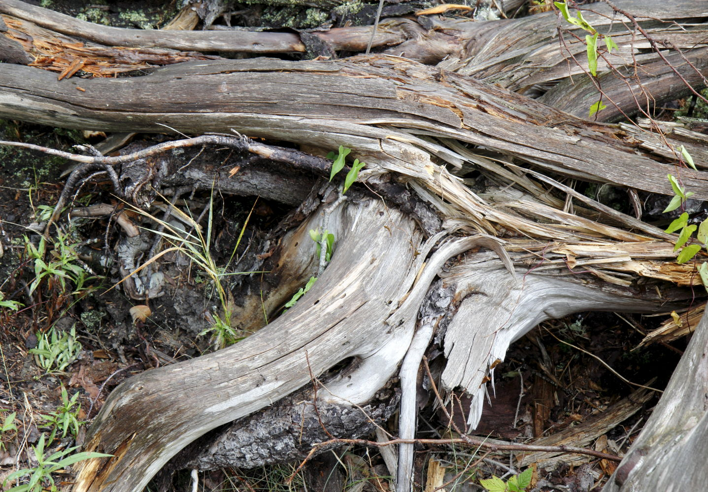 Wood + Leaves #3