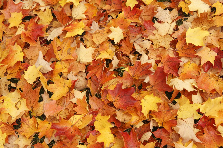 Wood + Leaves #6