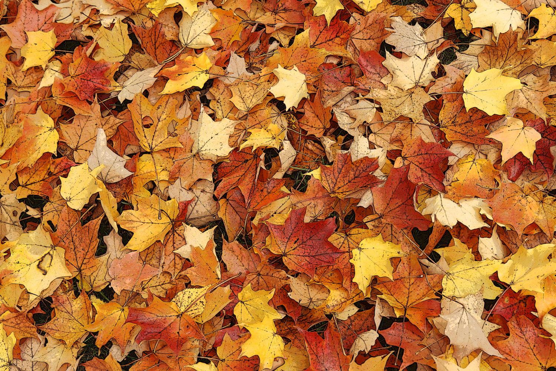 Wood + Leaves #7