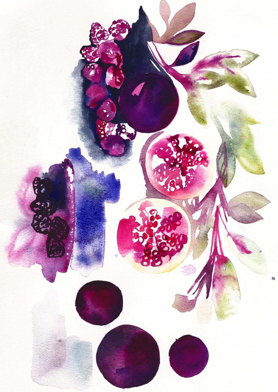 Pomegranate sketch Holly Sharpe for web.jpg