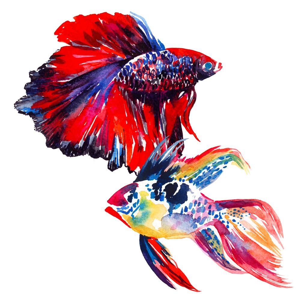 watercolour fish Holly Sharpe for web.jpg