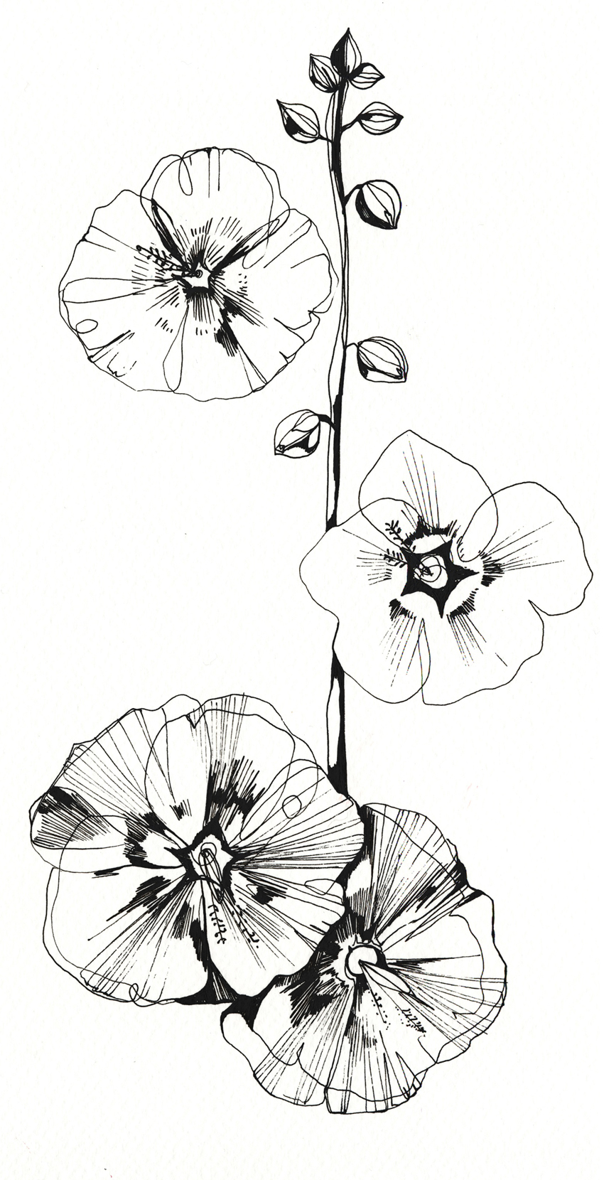 pen flowers holly sharpe for web.jpg
