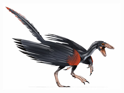 Artist's rendition of an Archeopteryx