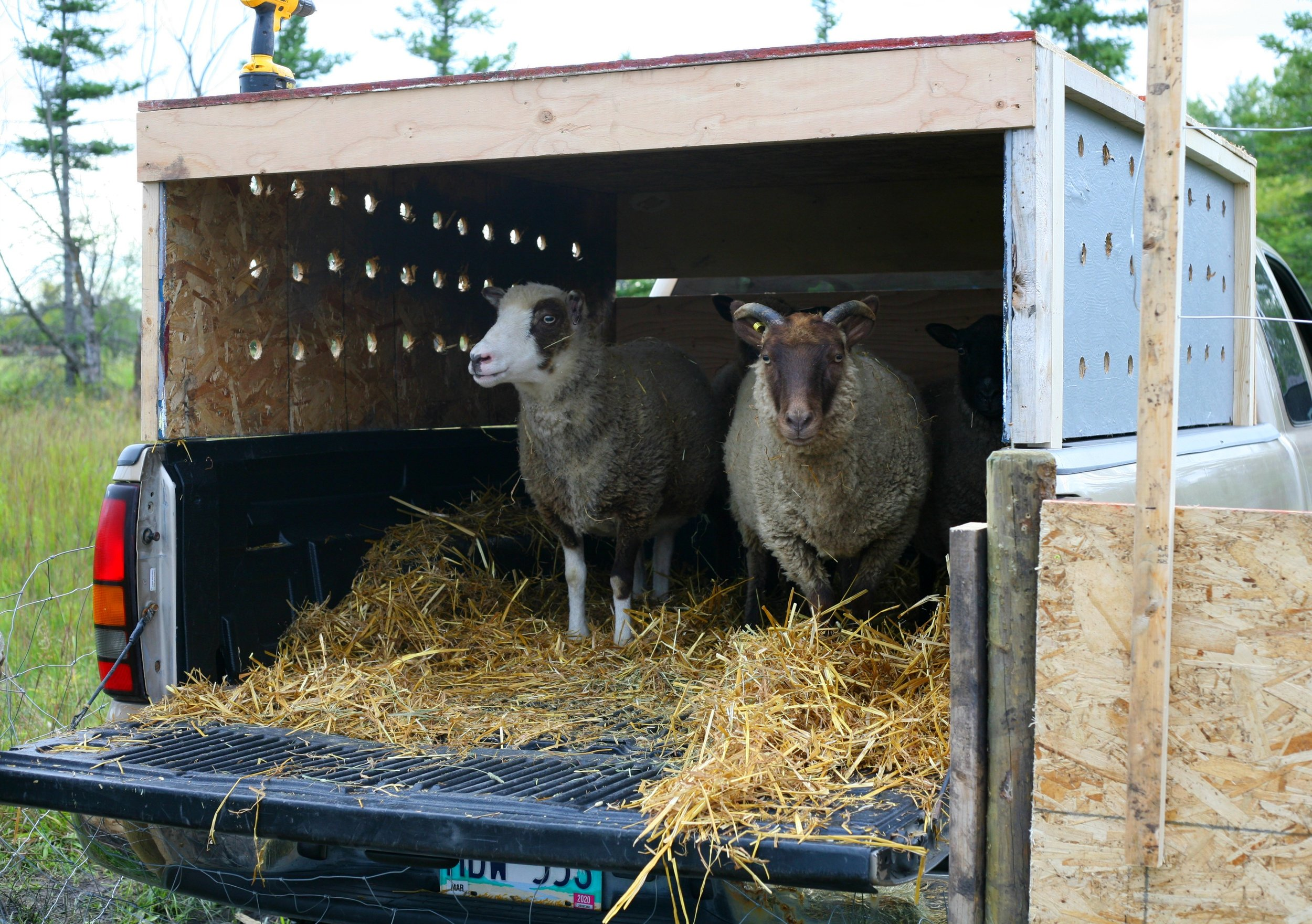 They were not totally sure if they wanted to get out of the truck.