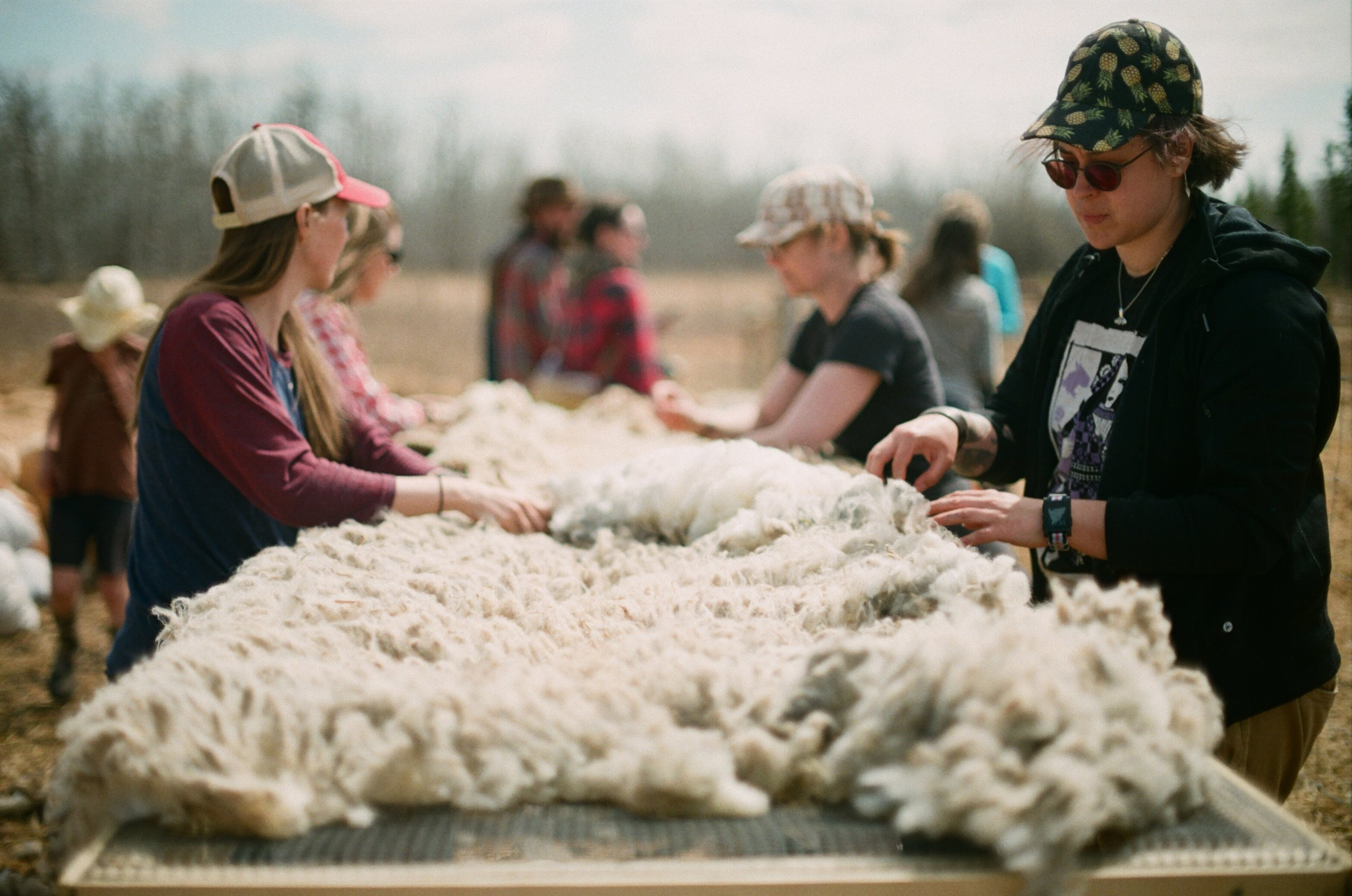 skirting fleeces                                                                                  (Photo by Mackenzie Smith)