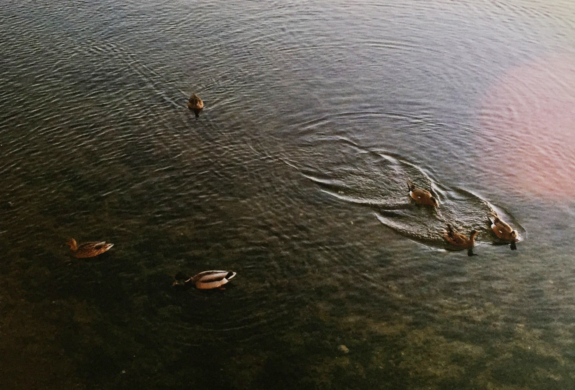 Swim your own path.