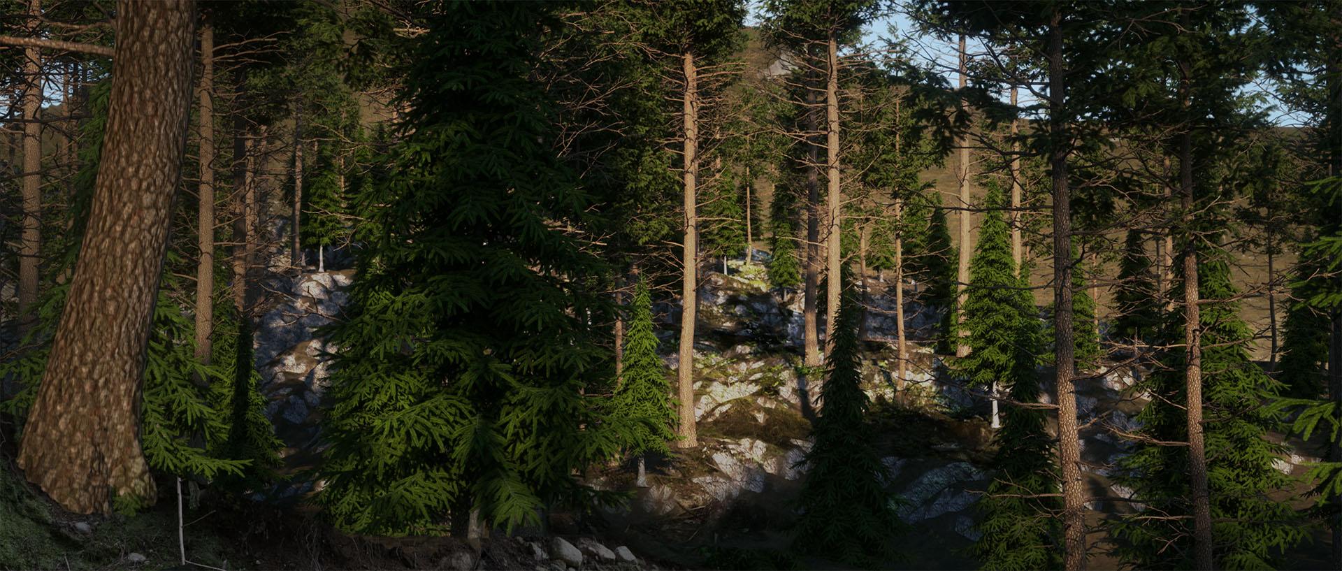 181227 Forest 2.jpg