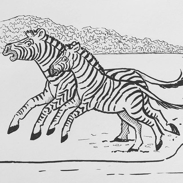 "Inktober day 5: ""Chicken"" formatted this length wise, so it is only part of the image/story. #inktober,#penandink,#zebras,#africananimals, #childrensbookillustration"