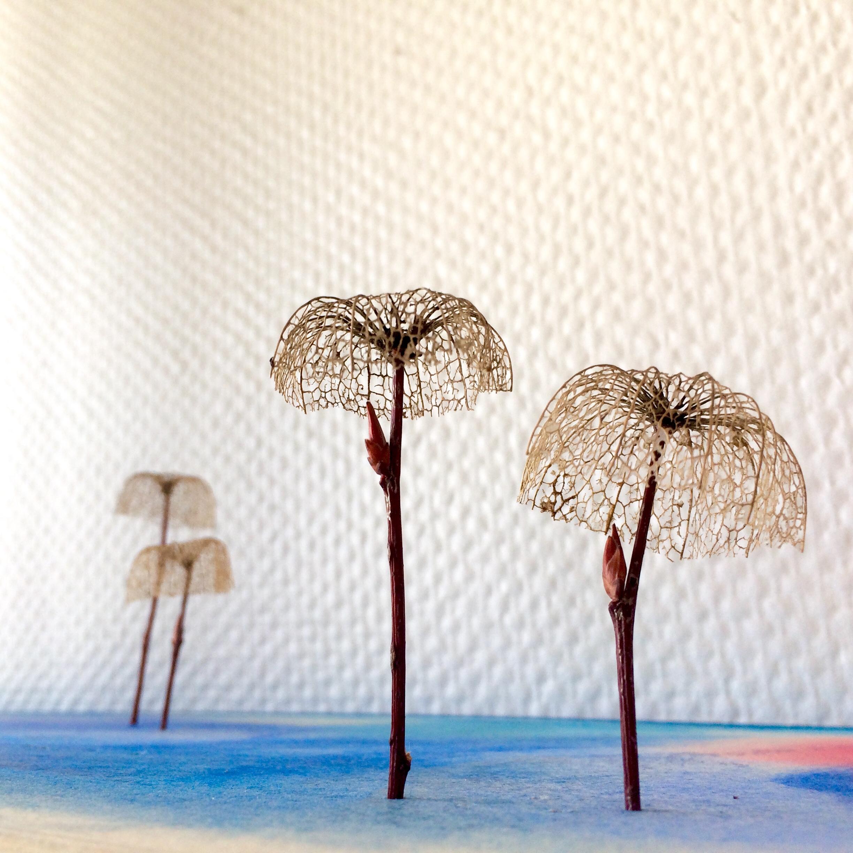 Je continue. Je crée des arbres en collant, sur des tiges à bourgeons, des fruits d'amour en cage séchés dont il ne reste que la dentelle structurale.