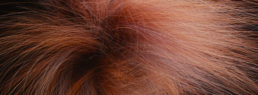 Cycles-hair.png