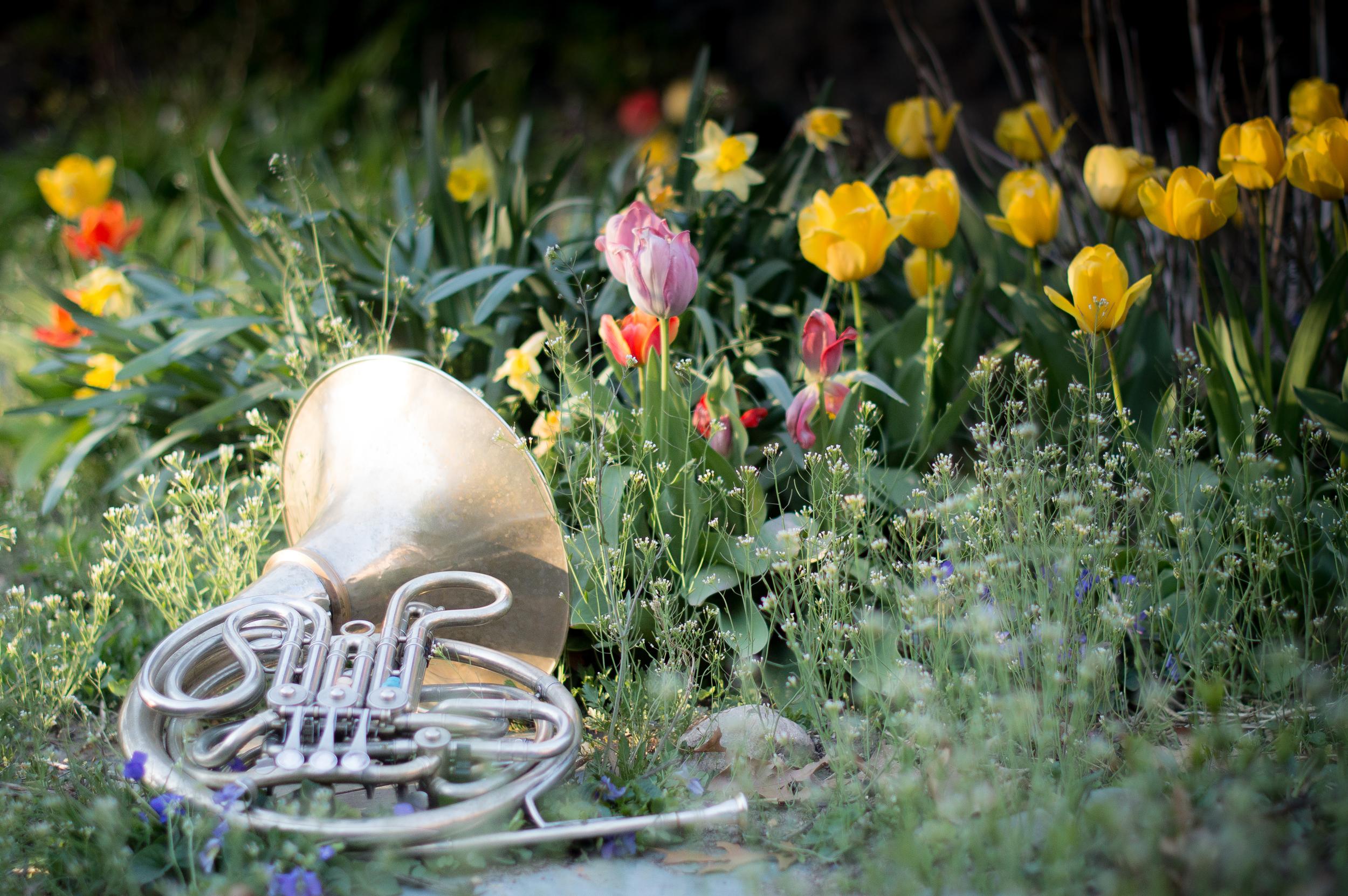 Spring horn 3.jpg
