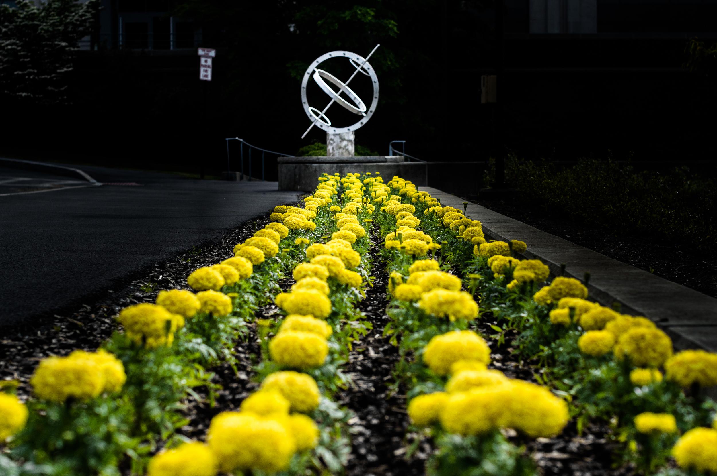 Ithaca flowers.jpg