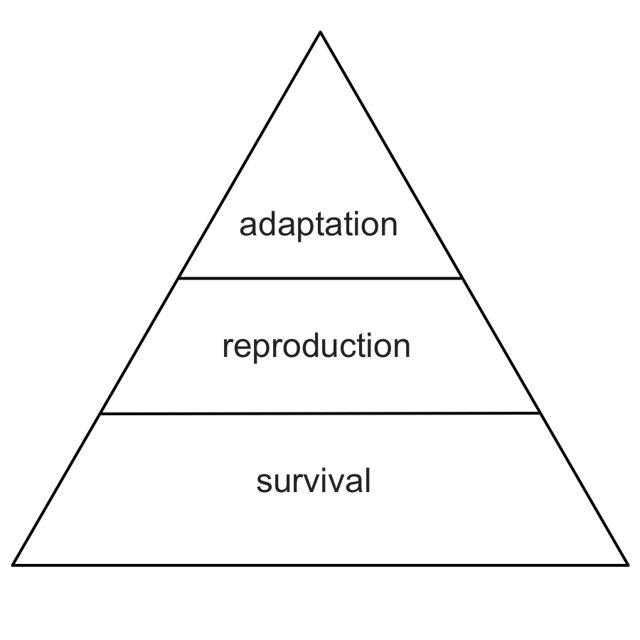 Survival, reproduction, and adaptation: the primary features of any self-directed system. Survival is the base layer, meaning that to survive is the most important proof that a system is successfully designed for its environment. Reproduction is the next layer, allowing successful systems to become more plentiful. Adaptation, finally, allows a system that has survived and reproduced to further adapt to its environment, giving it a chance to change or become even more successful.