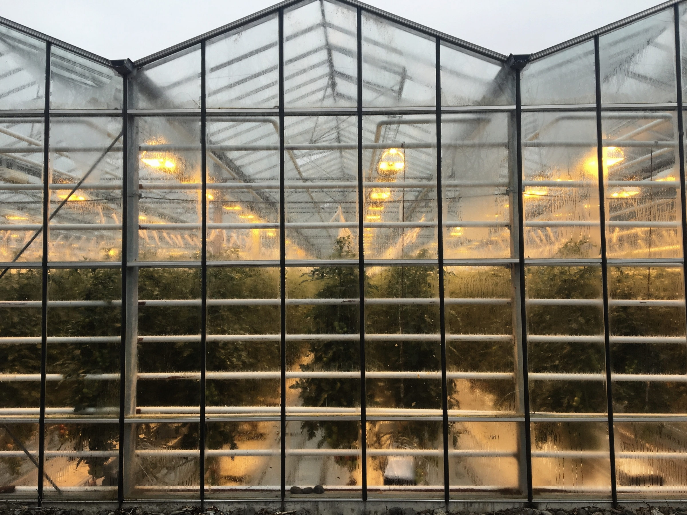 Iceland greenhouse travel