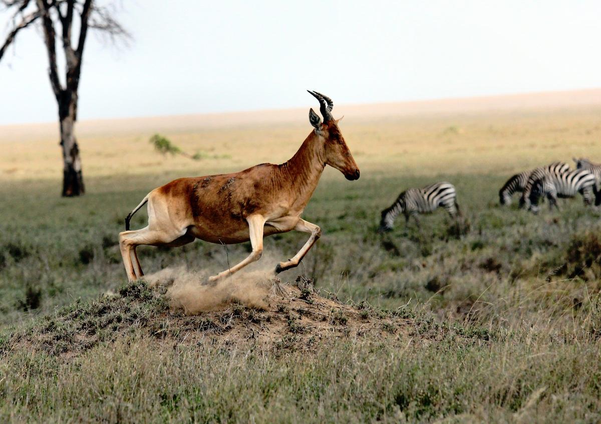 Tanzania safari travel bucket list