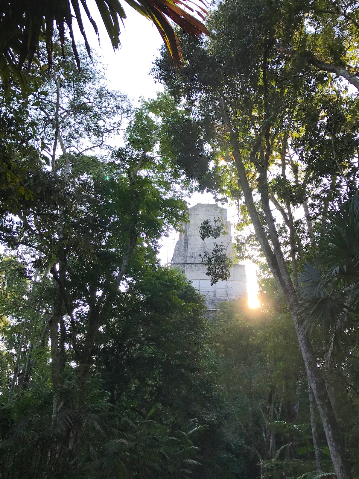 temple through the trees in Tikal National Park, Guatemala