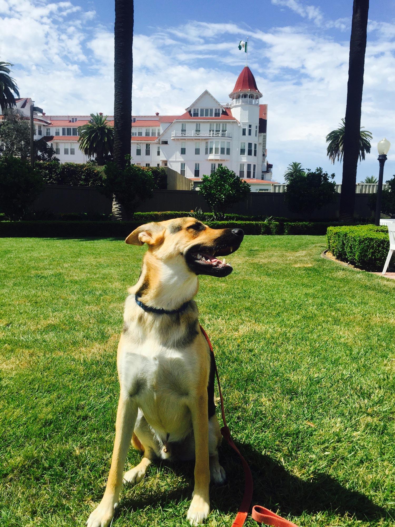 Sapphire & Elm Travel co-founder, Stephanie's Puppy Nephew Roman in front of the hotel del coronado