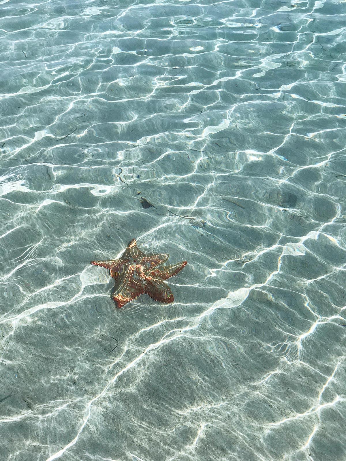 starfish on Playa Estrella, Isla Colon, Bocas del Toro