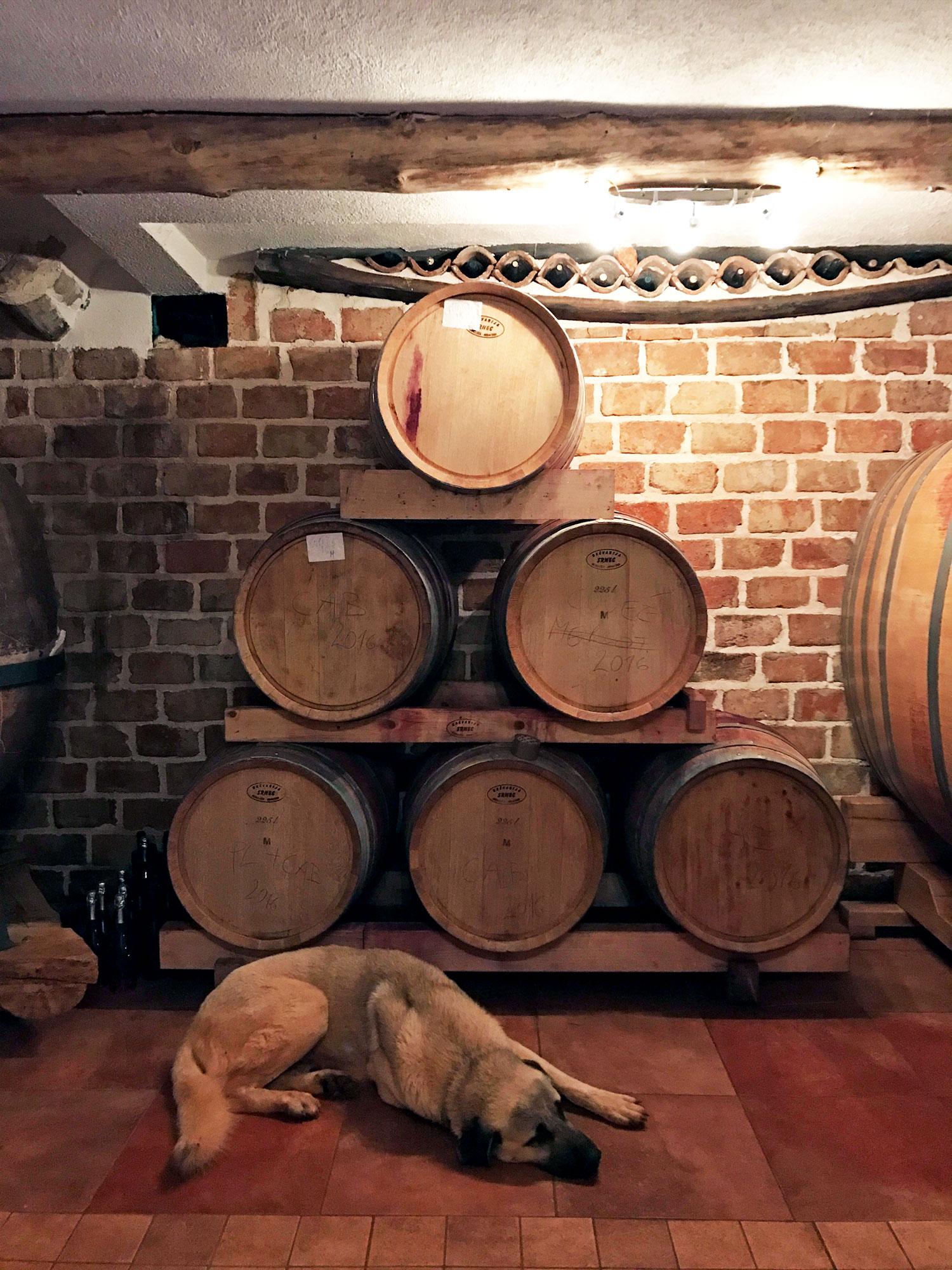 trusty dog protecting the wine barrels