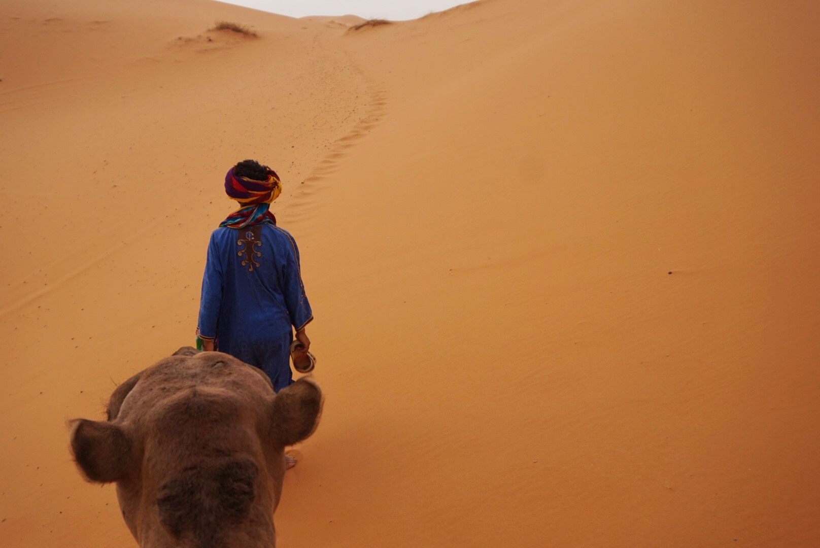 Camel trek into the Sahara Desert