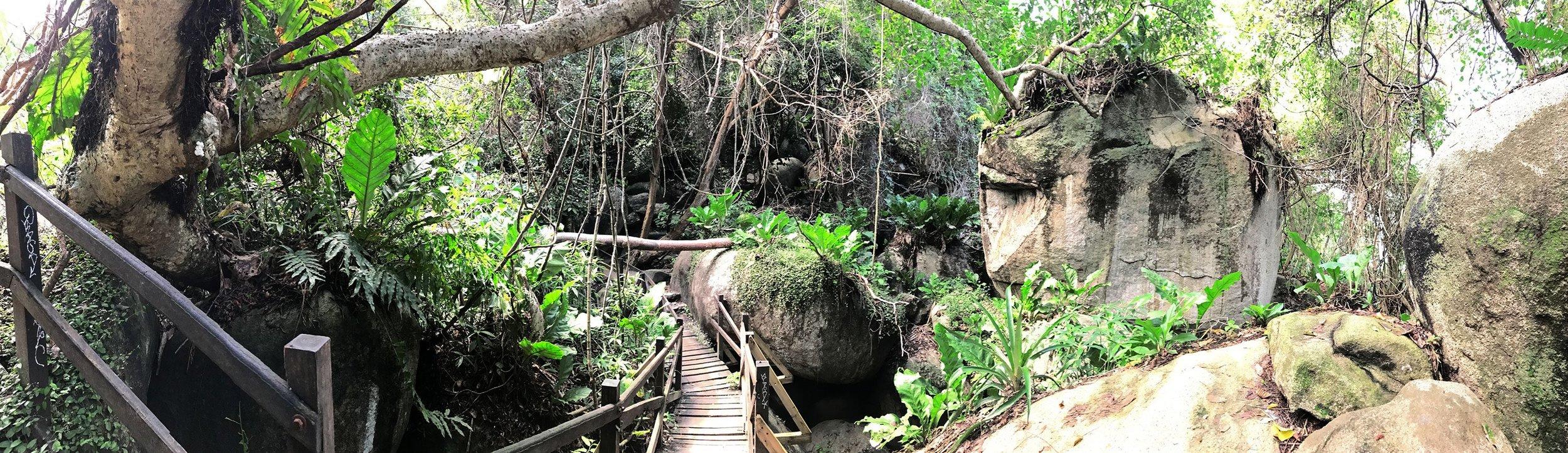 Tayrona-National-Park-Colombia-Indiana-Jones-jungle-pano.jpg
