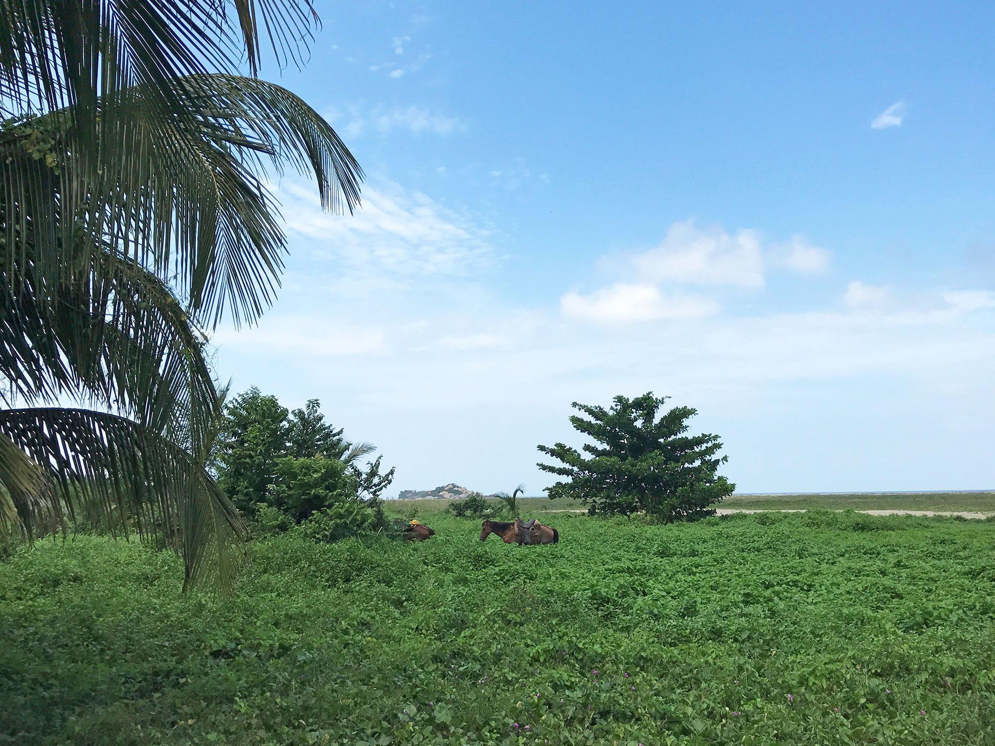 Tayrona-National-Park-Colombia-jungle-horses.jpg