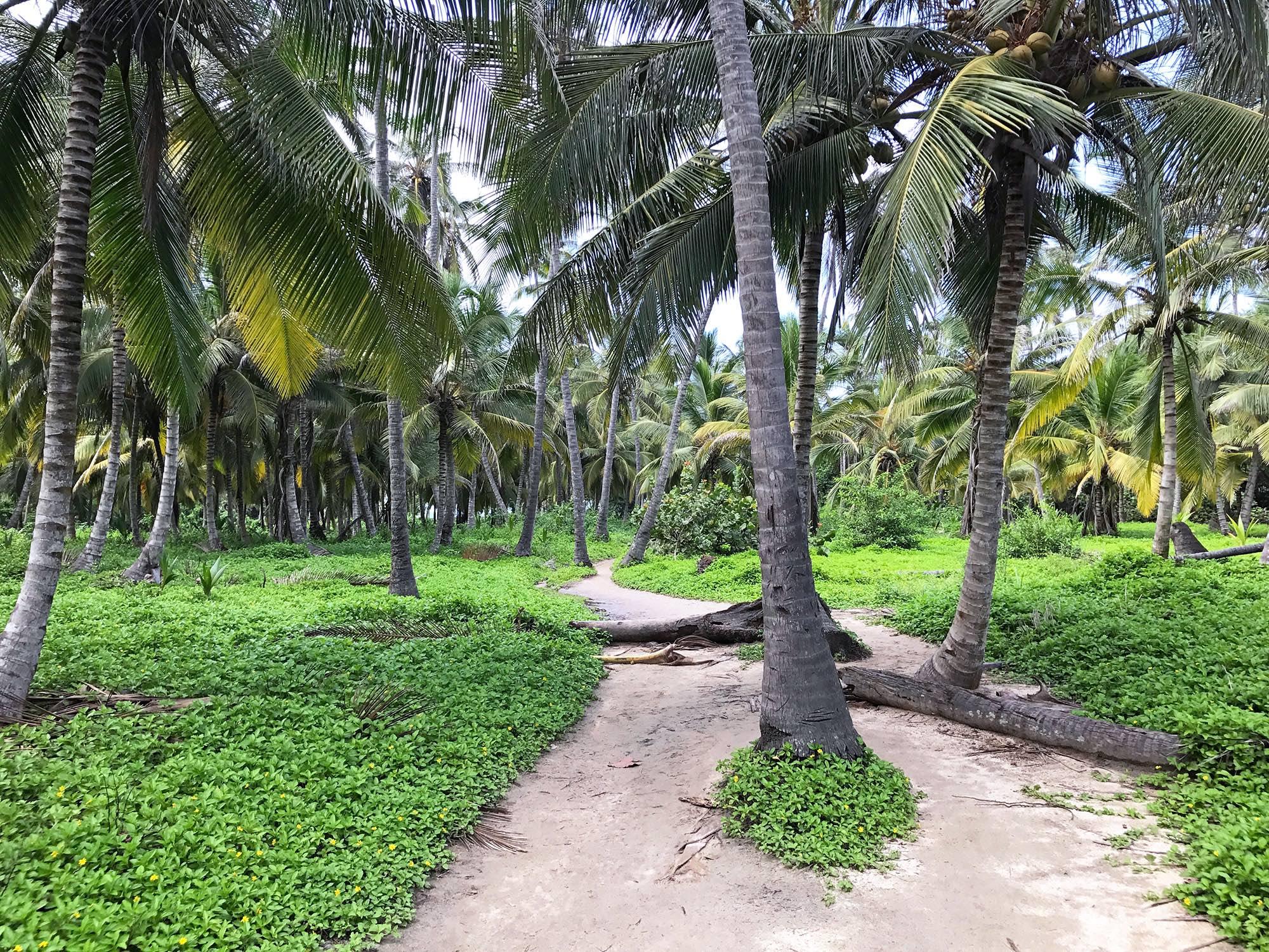 Tayrona National Park Colombia palm trees