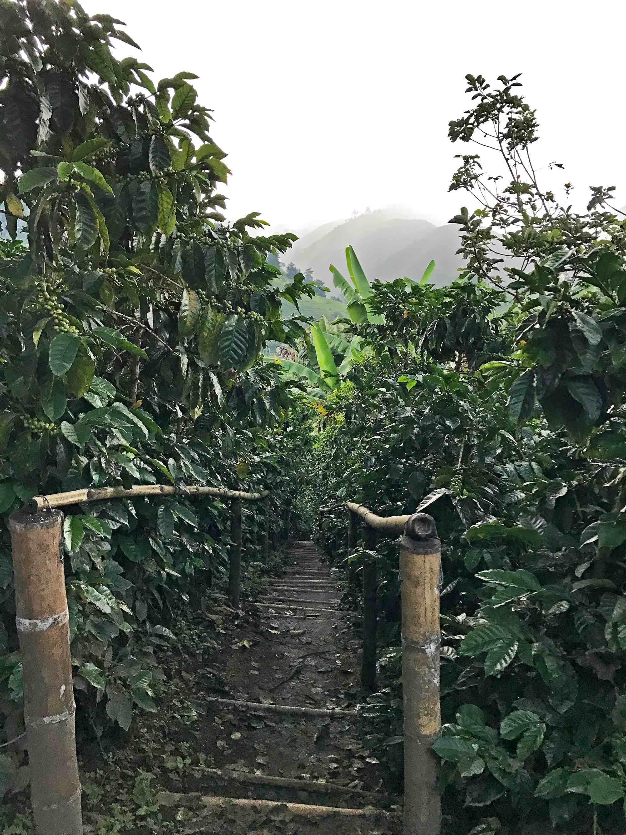 Café la Arzacia coffee farm, Salento, Colombia