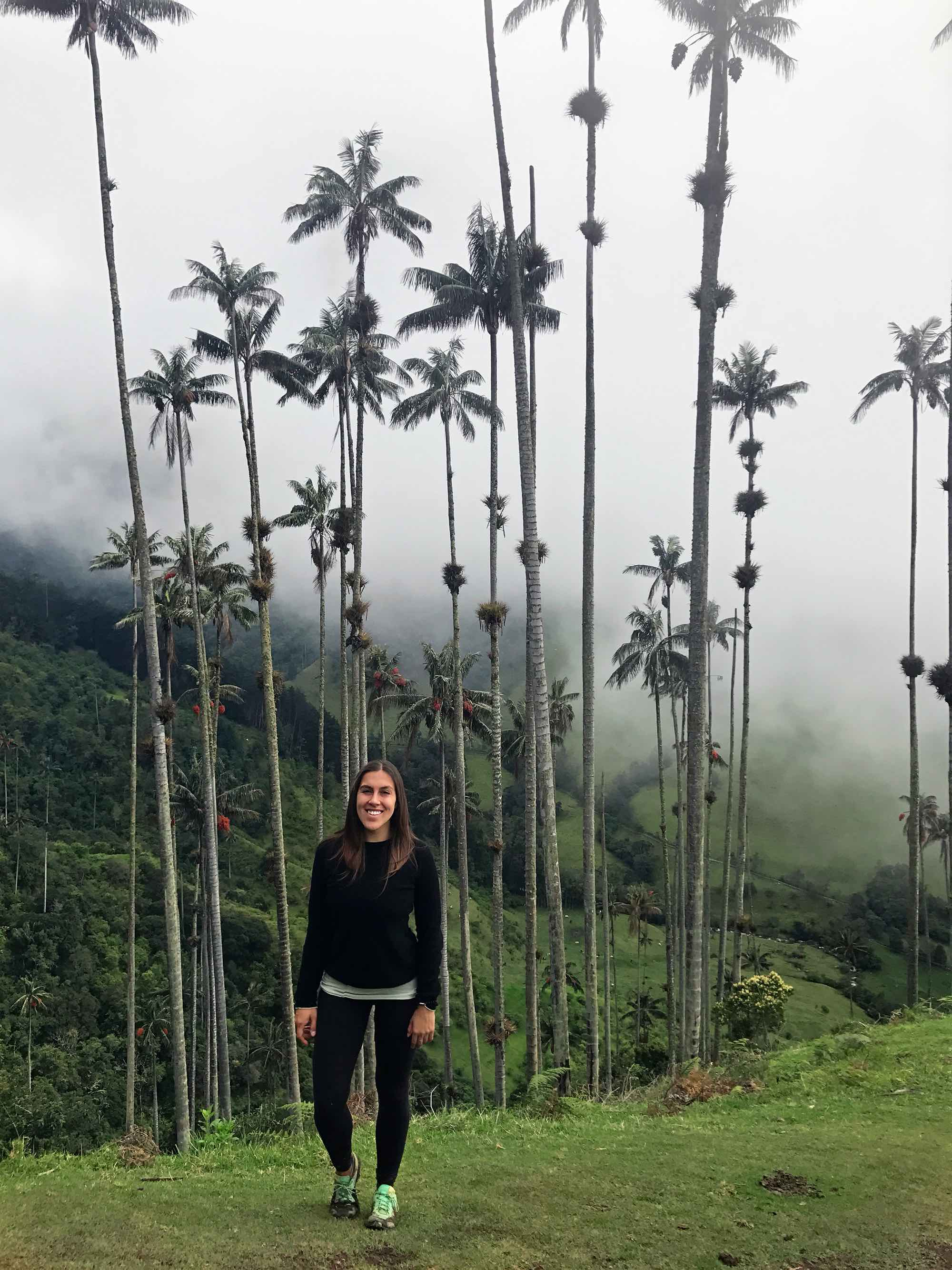 Wax Palm Trees | Cocora Valley, Colombia