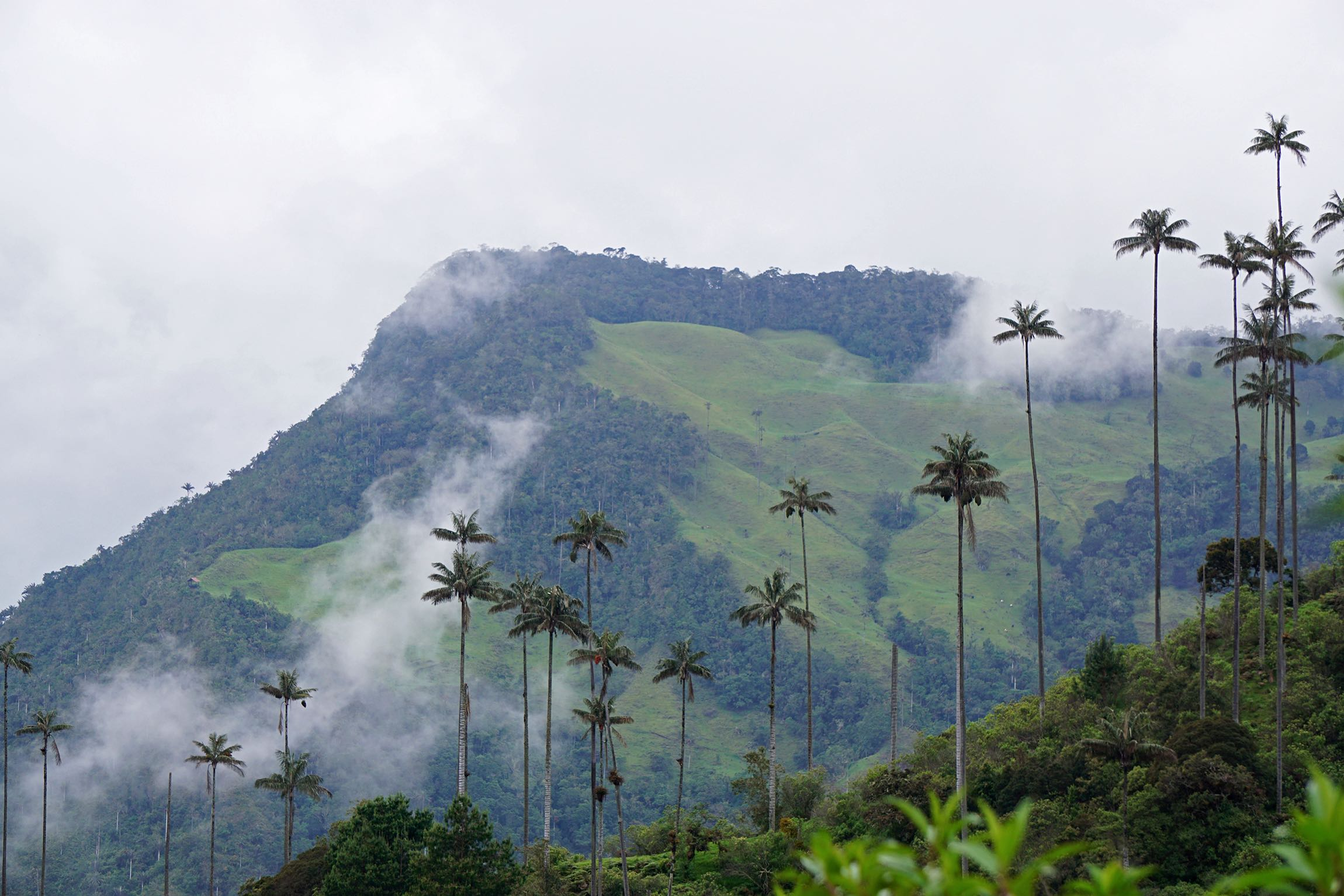 World's tallest palm trees | Hiking Cocora Valley, Salento, Colombia