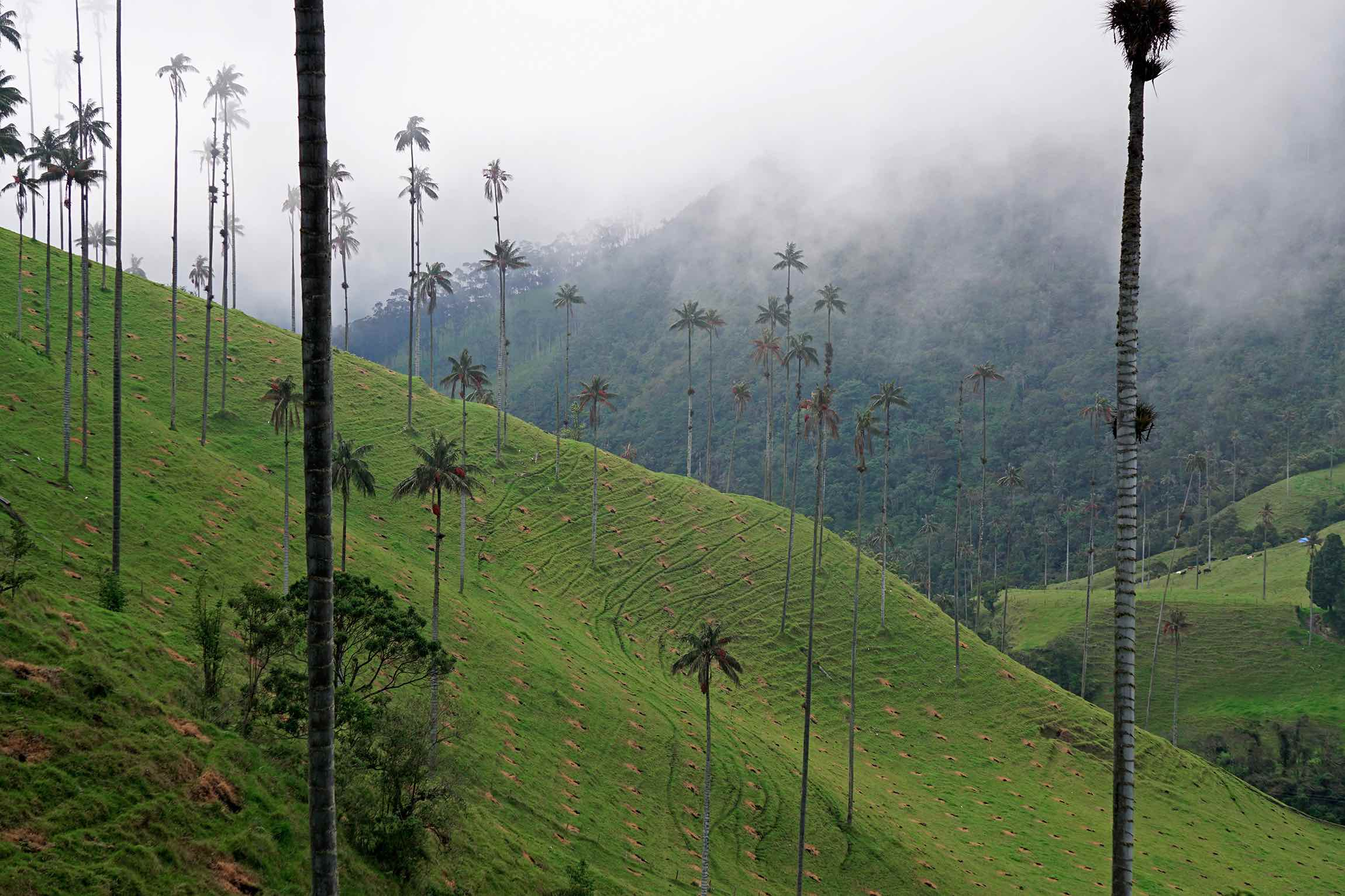Hiking Cocora Valley, Salento, Colombia