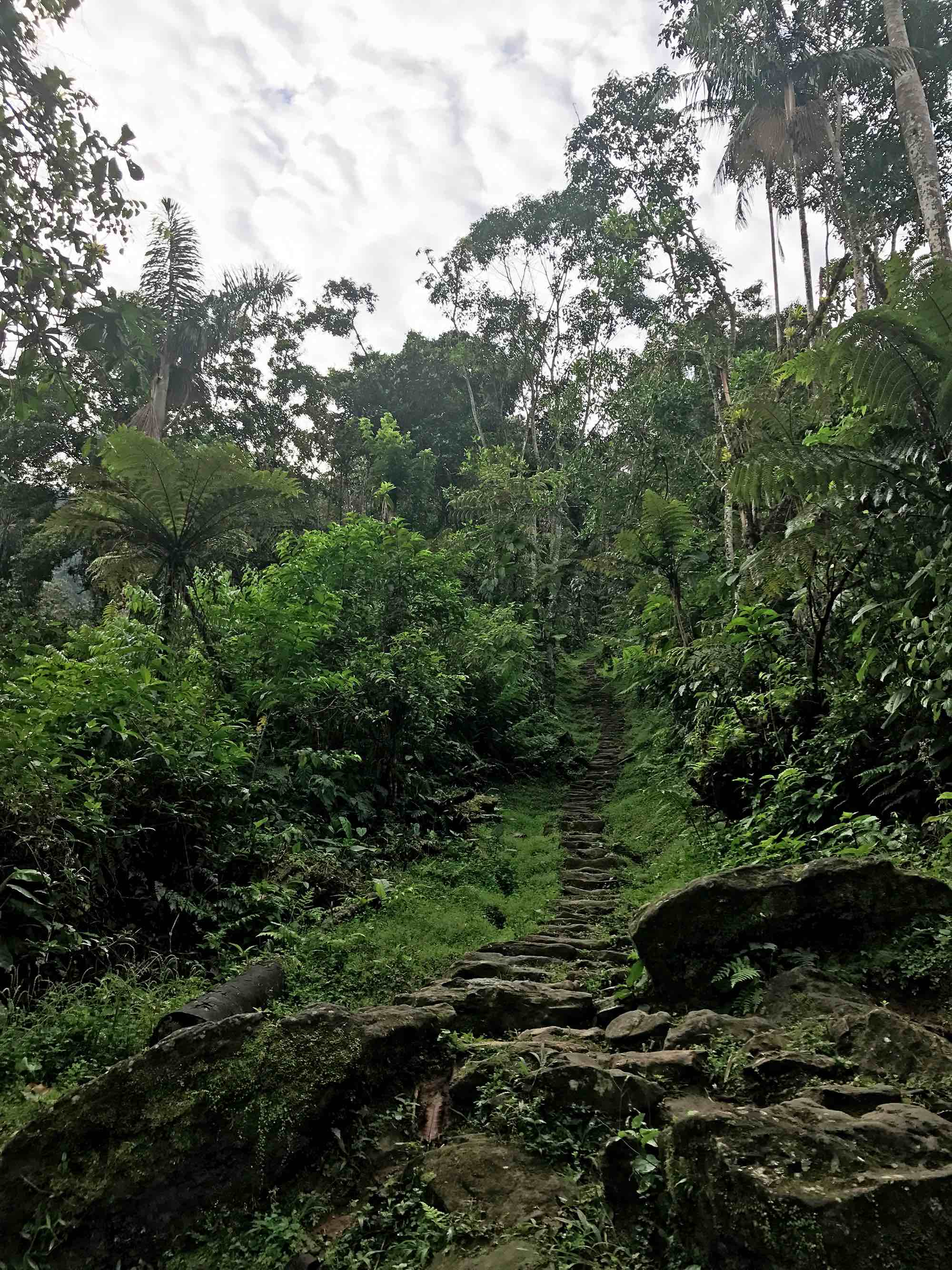 stairs to the Lost City, Colombia