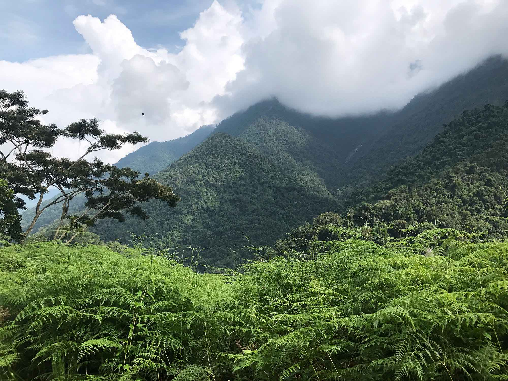 Lost-City-Colombia-hiking-jungle-views.jpg