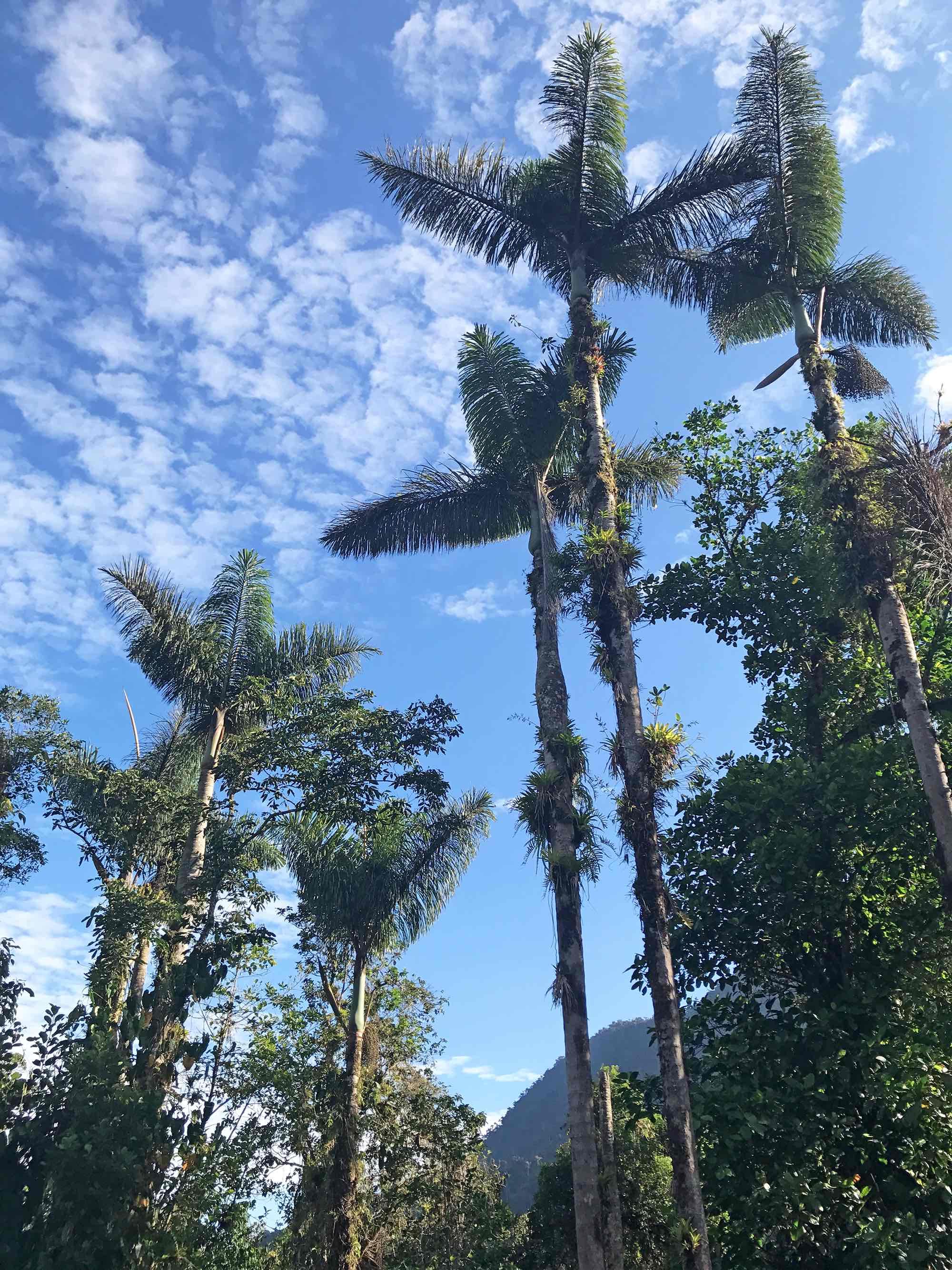 Lost-City-trek-Colombia-trees.jpg