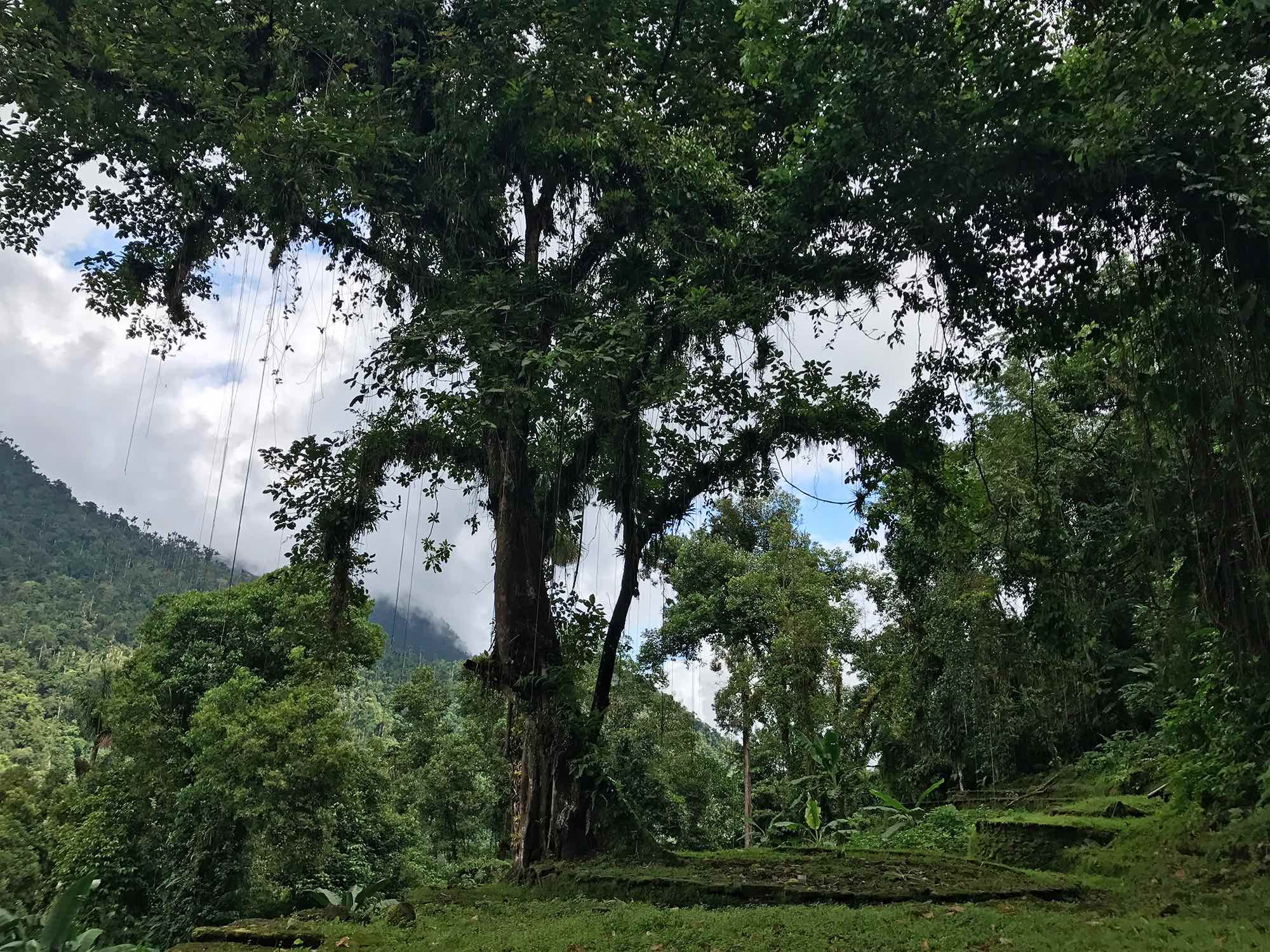 Lost-City-trek-Colombia-tree.jpg