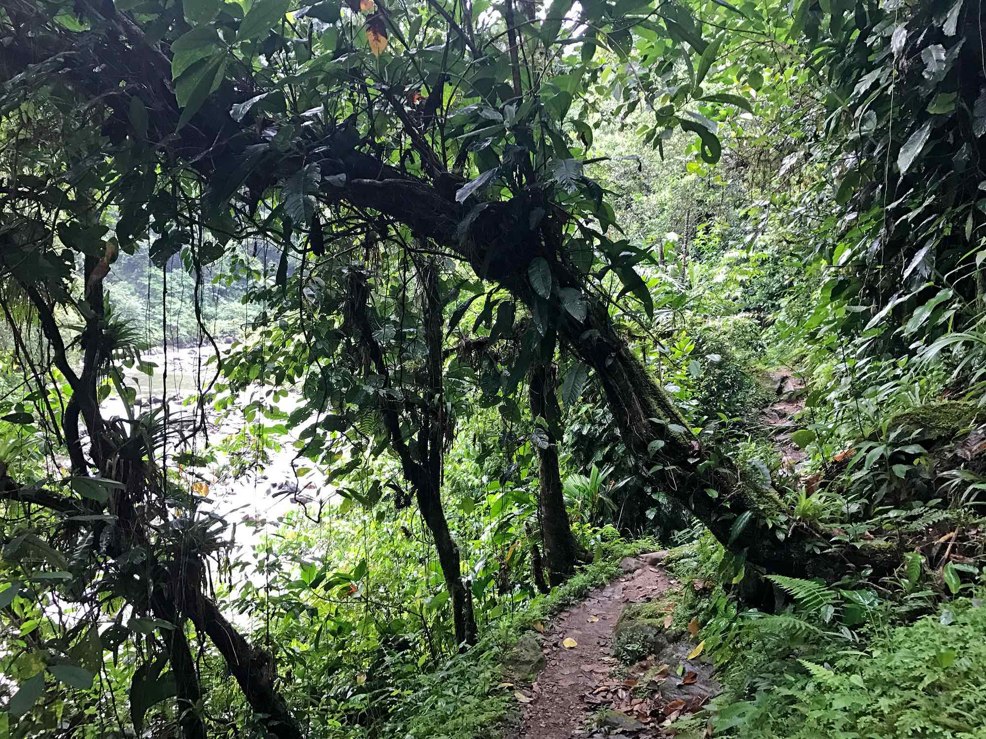 Lost-City-Colombia-hiking-jungle-views4.jpg