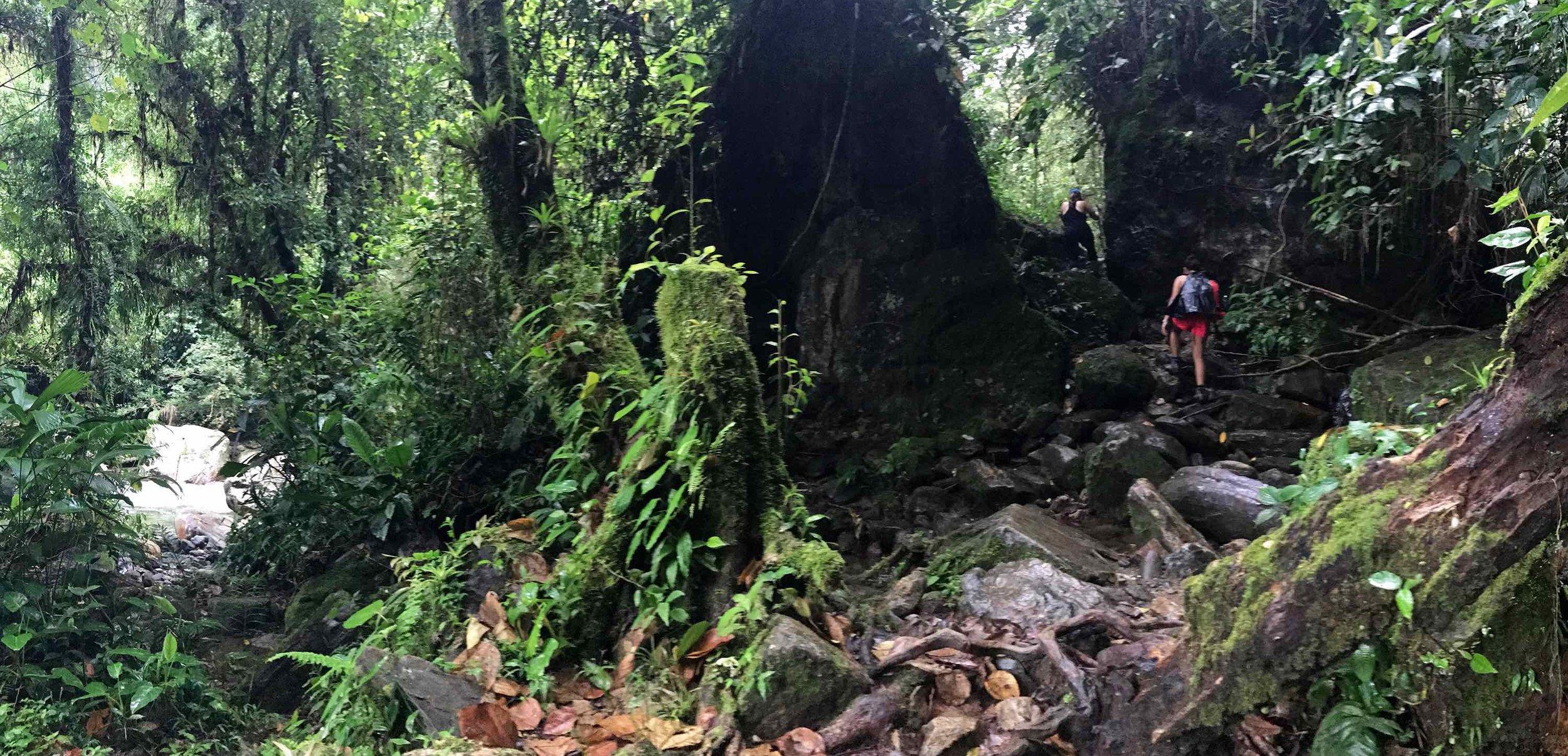 Lost-City-trek-Colombia-jungle.jpg