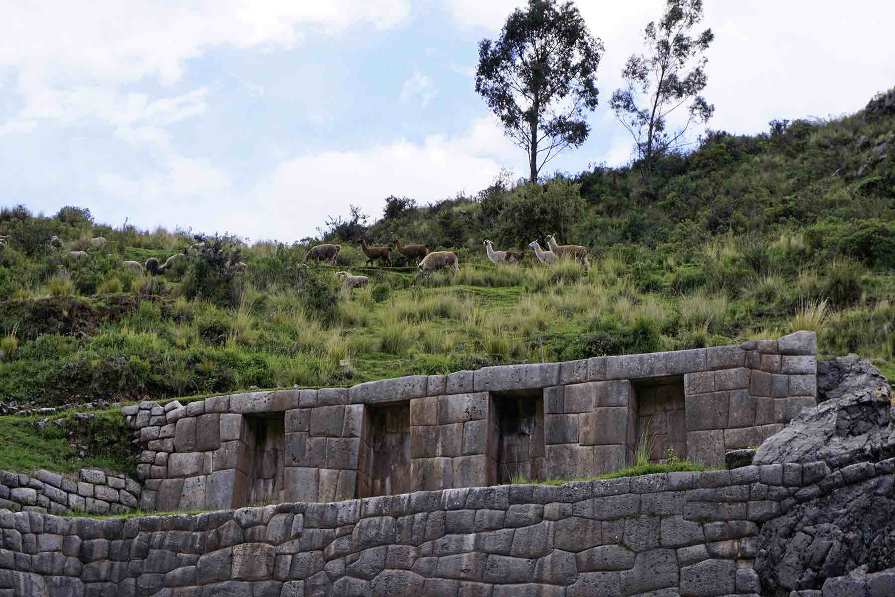 llamas at the Tambomachay Inca ruins near Cusco  | Lesser Known Inca Sites in the Sacred Valley of Peru