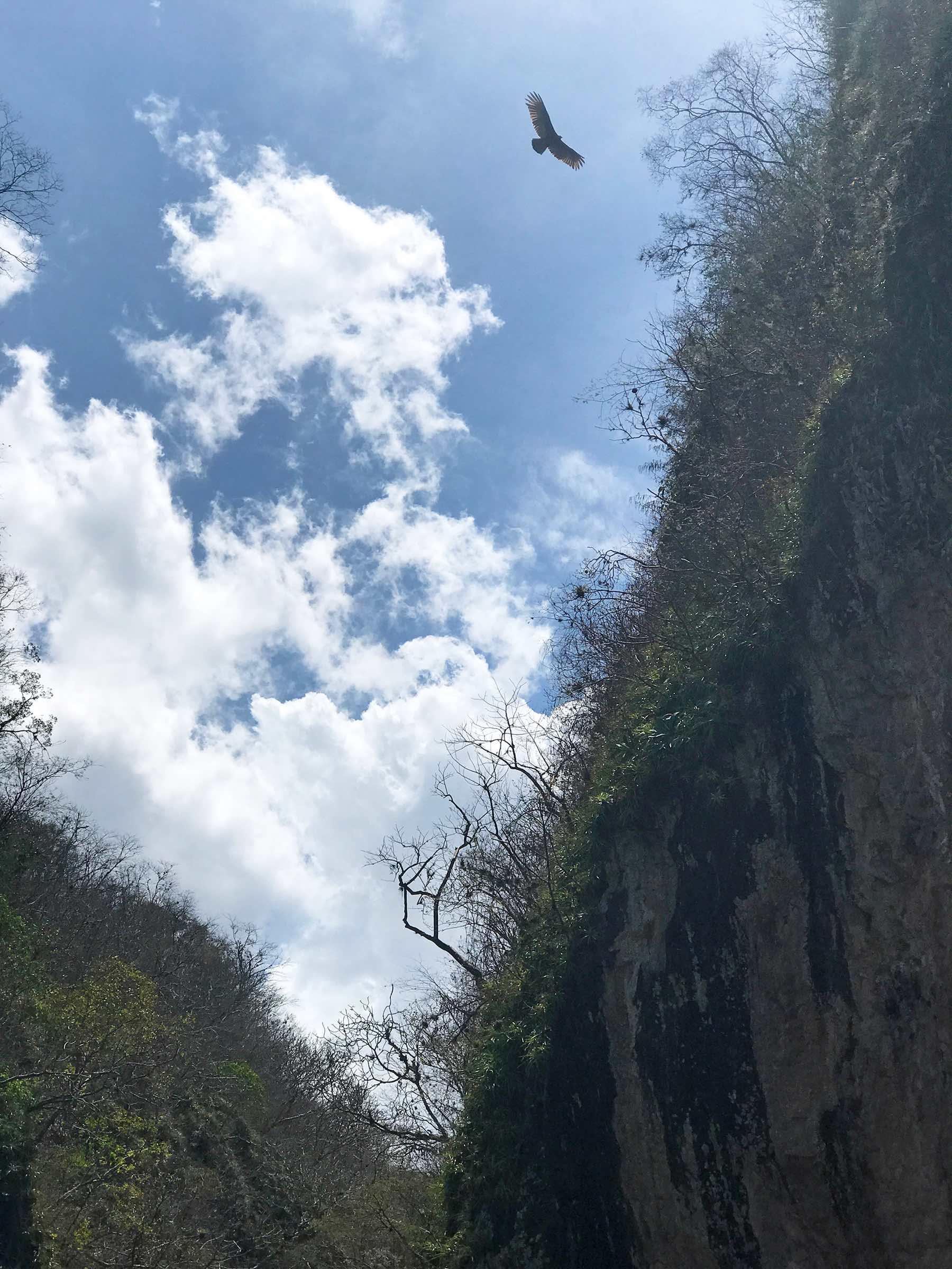 bird flying overhead in Somoto Canyon Nicaragua
