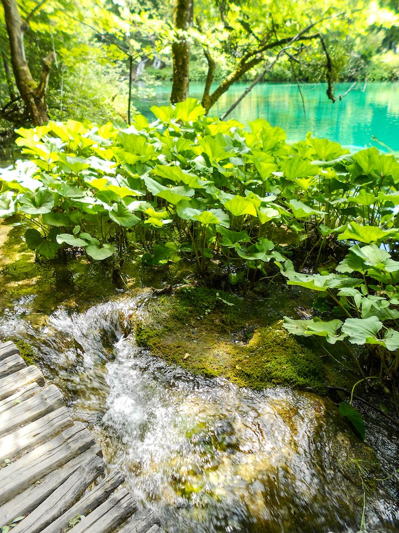 Plitvice Lakes National Park path