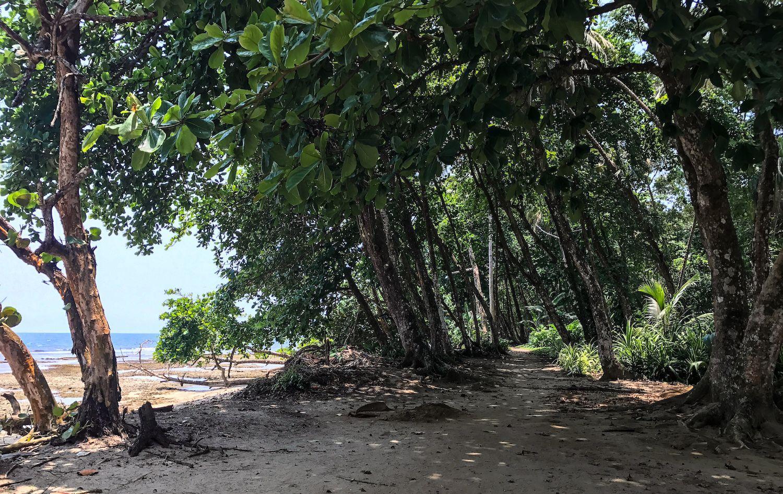 beach path in Puerto Viejo Costa Rica
