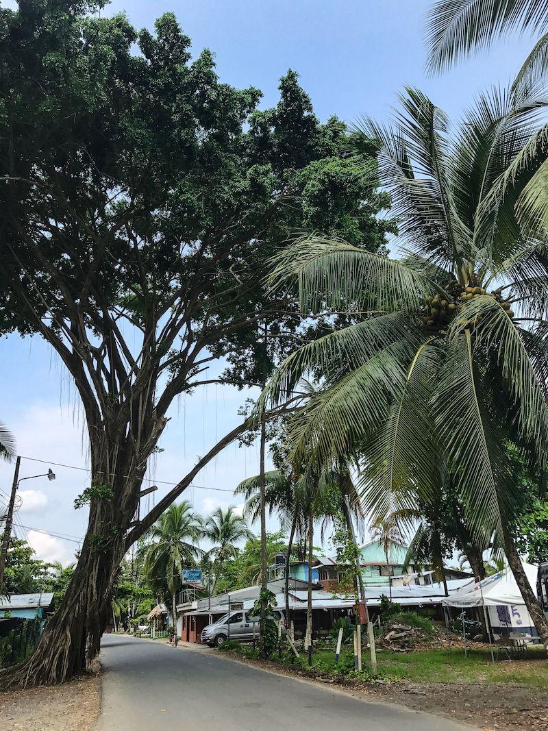 Puerto Viejo Costa Rica tree