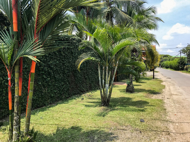 Puerto Viejo Costa Rica palm trees