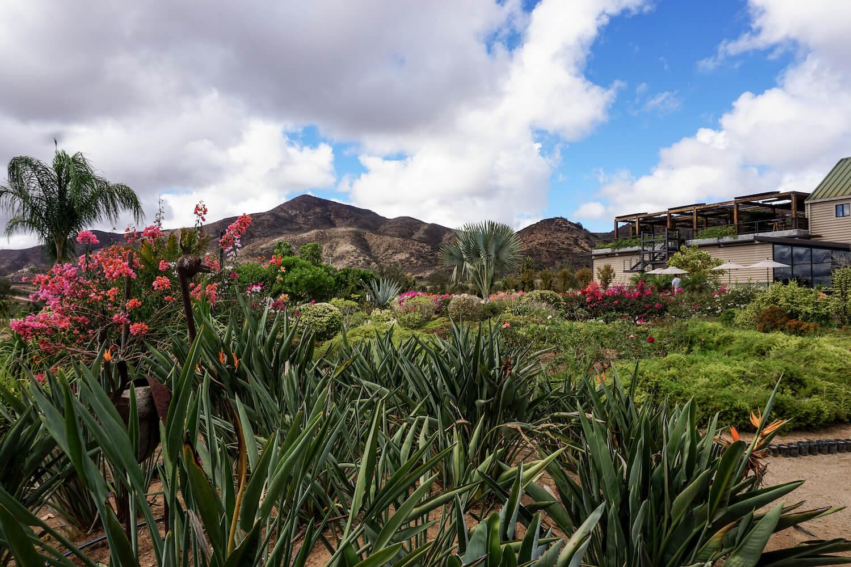 La Carrodilla Winery in Valle de Guadalupe, Mexico