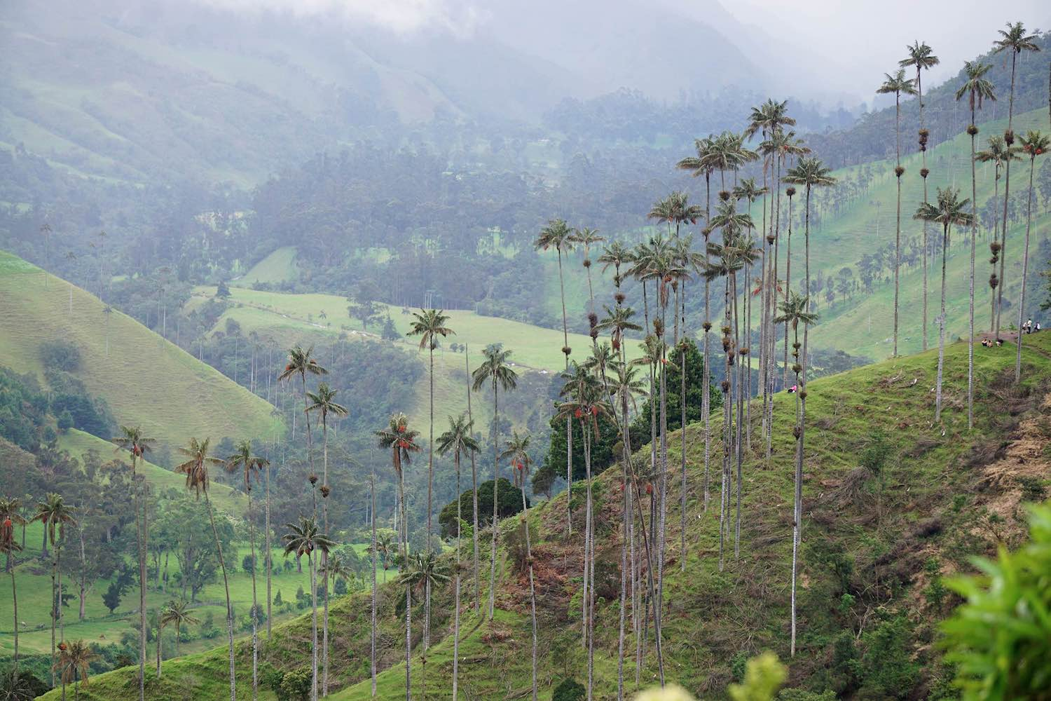 Cocora Valley, Salento, Colombia | Warm Weather Destinations to Escape the Cold