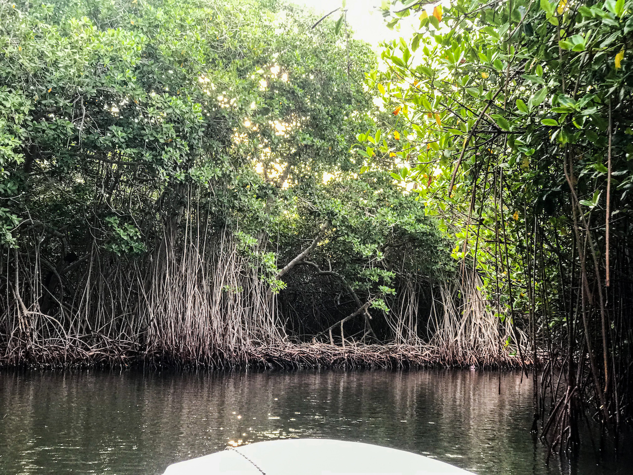 mangroves colombia