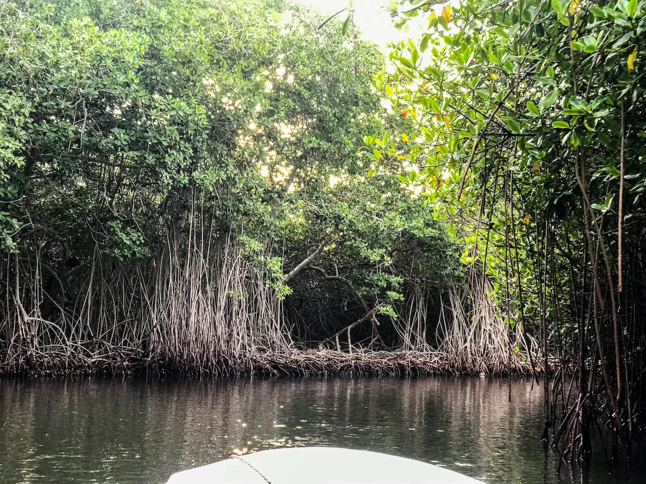 mangroves colombia bioluminescence kayaking