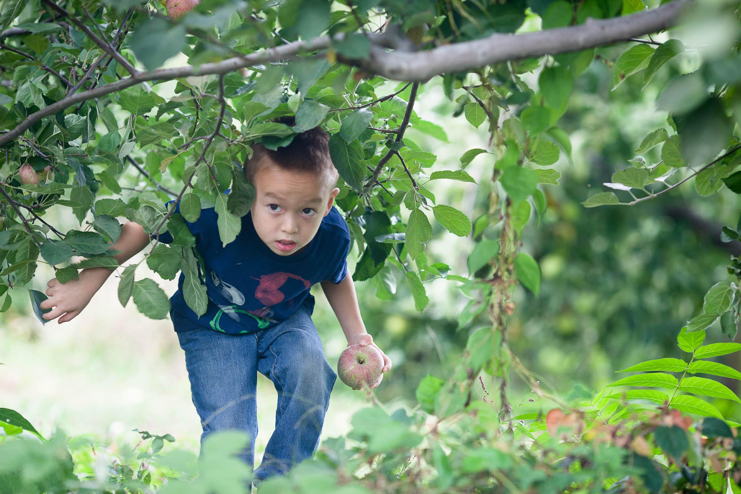 161008_apple_picking_024.jpg