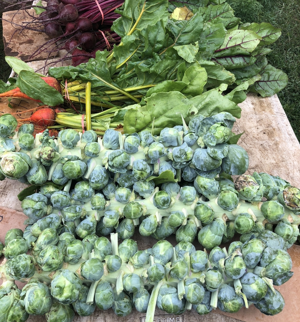 your local farmers market is a great place to pick up locally grown brussels sprouts.