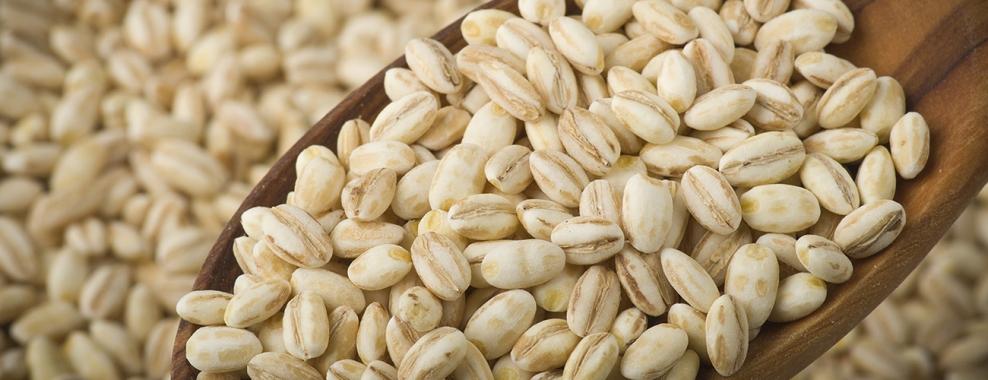 barley grain.jpeg